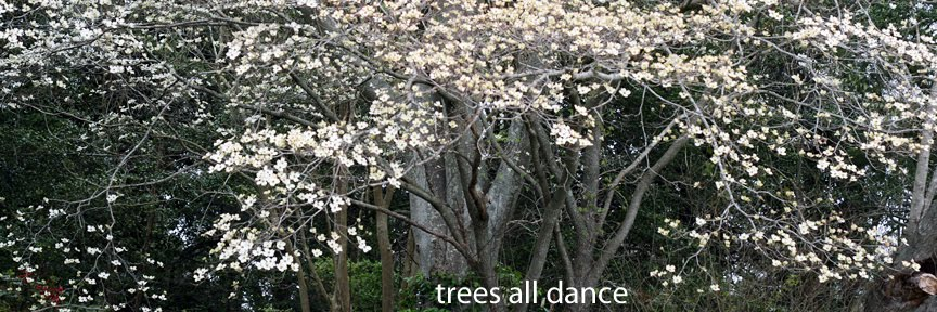 trees all dance