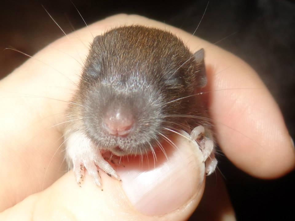 Of Mind At Night Doc T Deformed Rat Baby