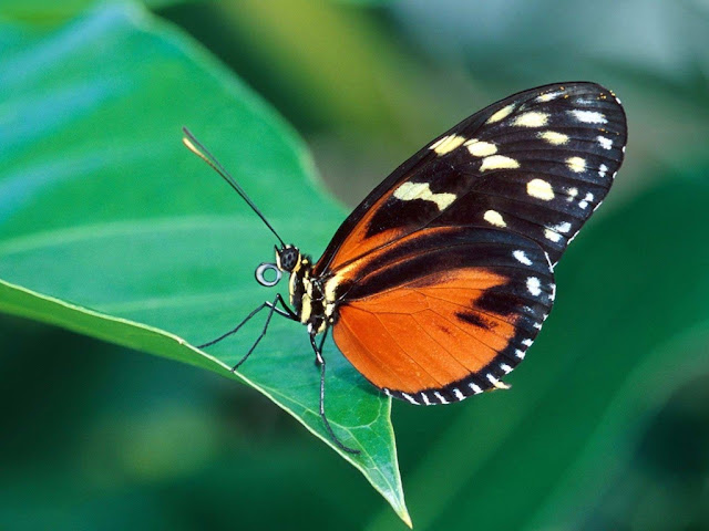 Interesting facts on butterflies