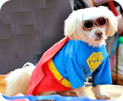 funny super dogs interesting facts amp latest pictures