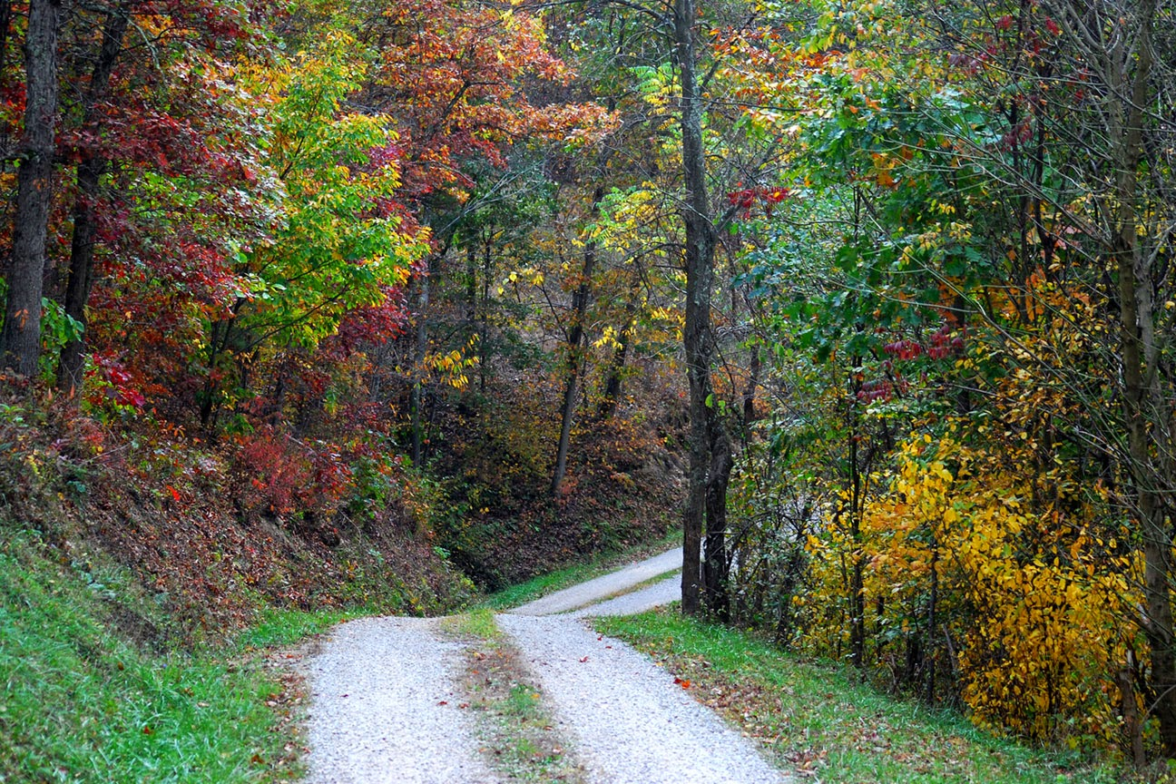 a country road in West Virginia--leading to my grandparents' farm
