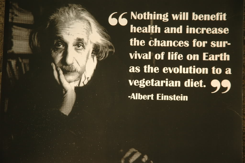 ... Albert Einstein Quotes ...