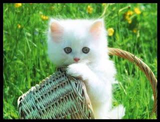 Hukum Jual Beli Kucing