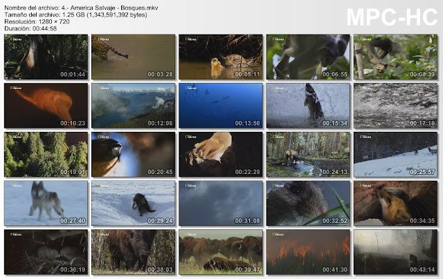 |NATGEO WILD|4GB|America Salvaje|4/4|HD 720p|MEGA