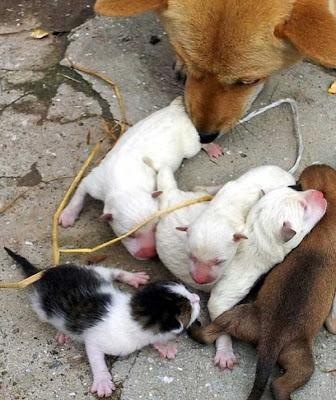 anjing lahirkan kucing