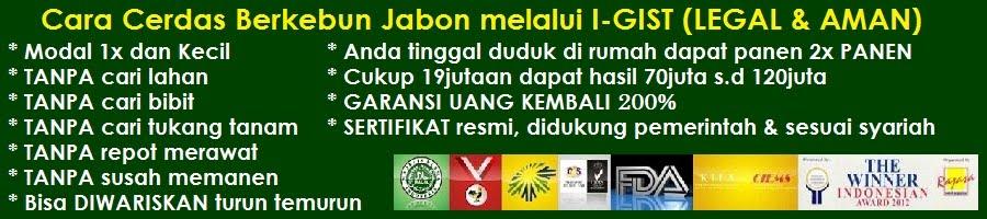 INVESTASI JABON | JASA BUDIDAYA JABON TERBAIK DI INDONESIA | BISNIS KAYU JABON I-GIST BENGKALIS RIAU