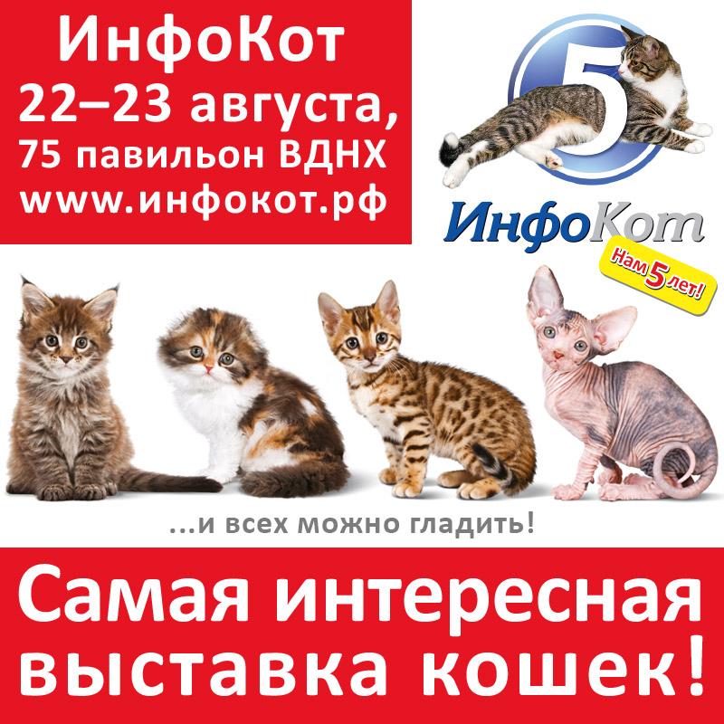 Самая интересная выставка кошек ИнфоКот