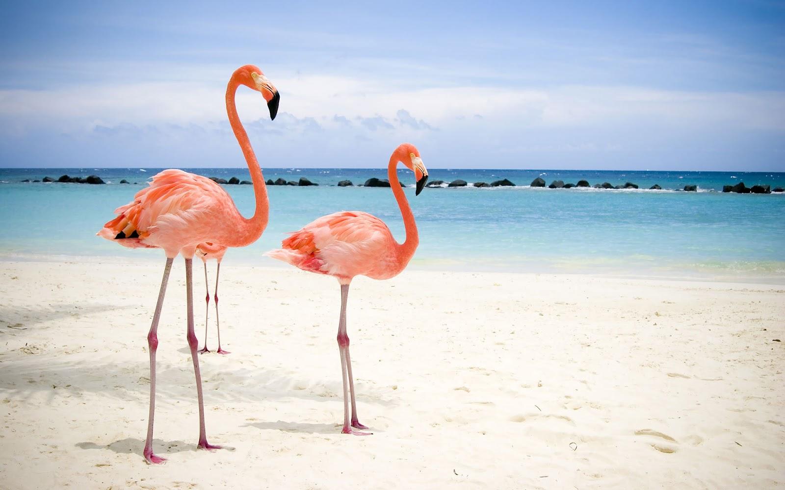 http://1.bp.blogspot.com/-9-OhOh09JQw/T_3nU7cahjI/AAAAAAAAB0Q/BY58kQcClk0/s1600/vogels-achtergrond-twee-roze-flamingos-op-het-strand-bij-de-zee-hd-wallpaper.jpg