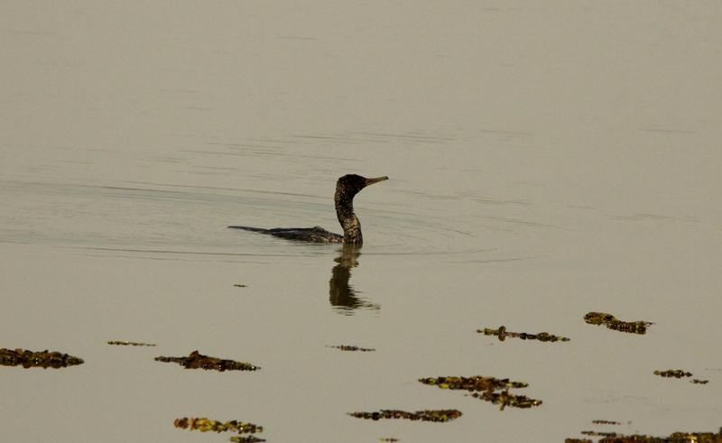 lake cormorant hindu single men Browse lake cormorant ms real and single family homes for lake cormorant real estate memphis land for sale walls land for sale horseshoe lake land for sale.
