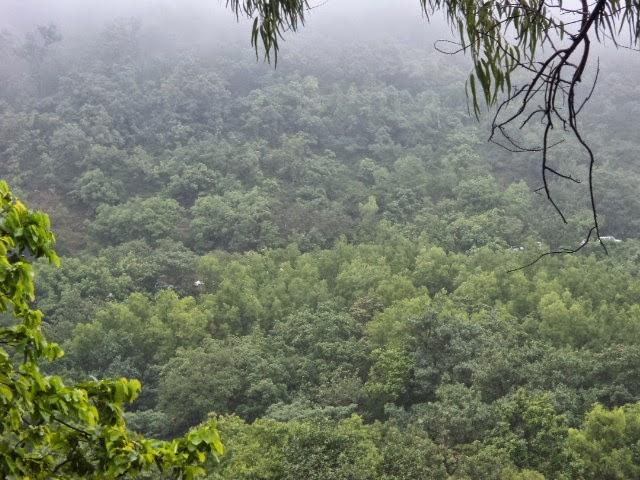 satpura forest panchamdi