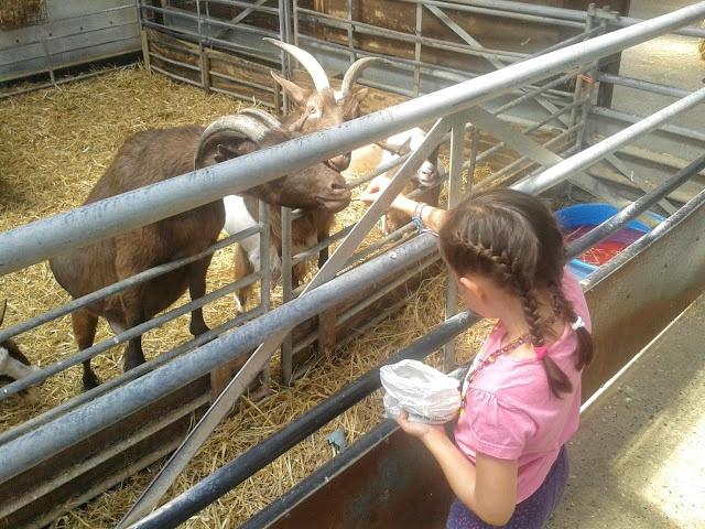 Lucía en una granja dando de comer a las cabras