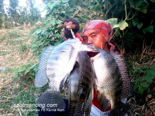 Cara Memancing Ikan Nila Babon