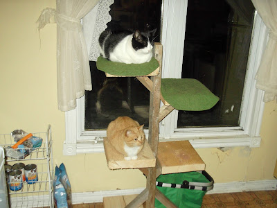 Molly and Sassy on a cat tree