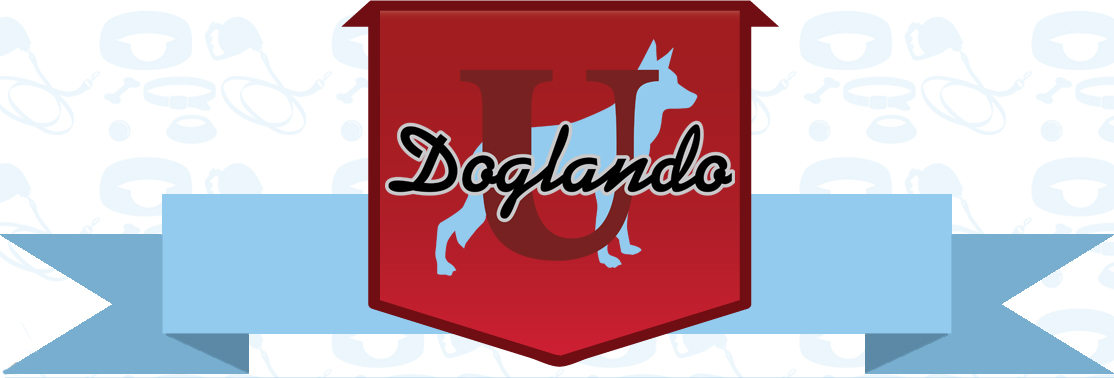 The Doglando Blog : Orlando Dog Grooming | Orlando Dog Training | Dog Day Care Orlando