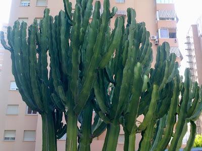 Los cactus entre patios y plantas for Cactus variedades fotos