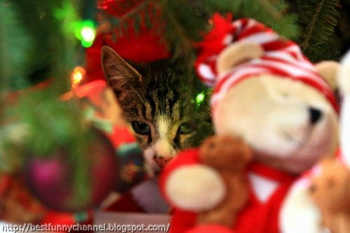 Cat among the Christmas toys.