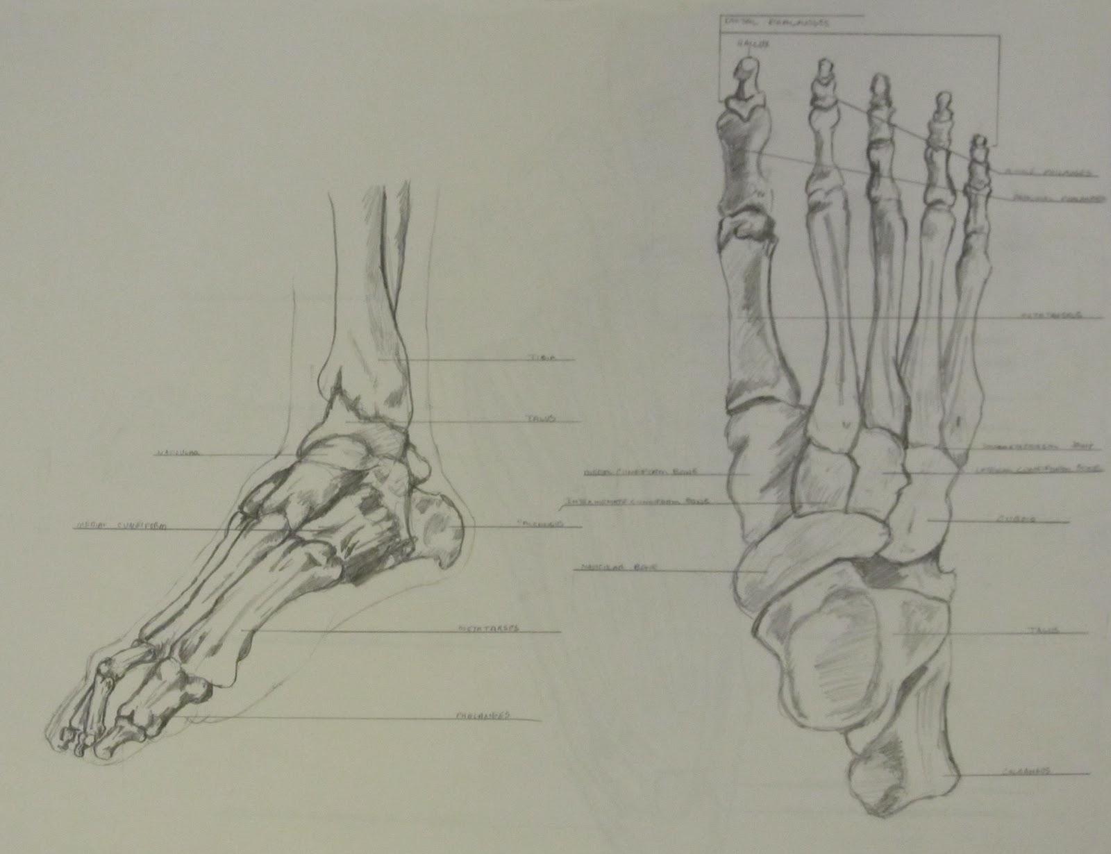 Cartoon Of Green Human Arm And Hand Bones - Royalty Free Vector ...