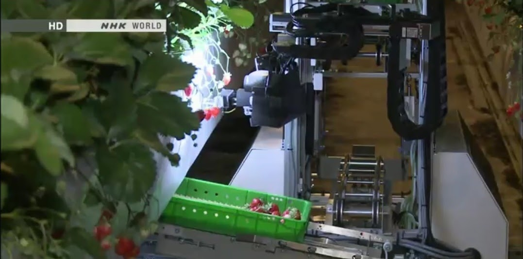 strawberry picking machine