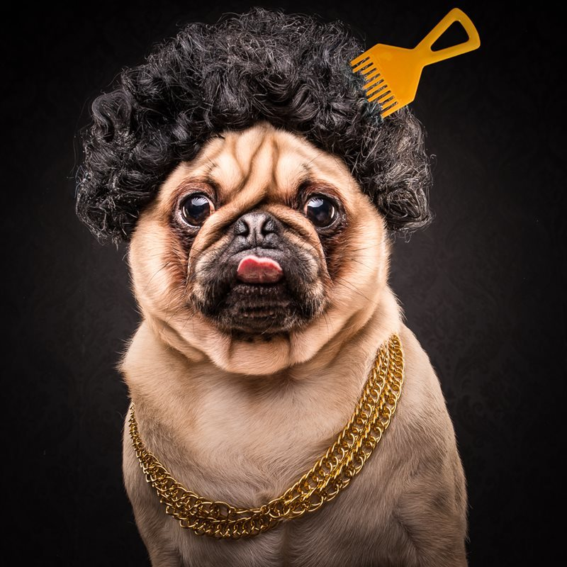 Meet The Hip Hop Dogs Of 21st Century