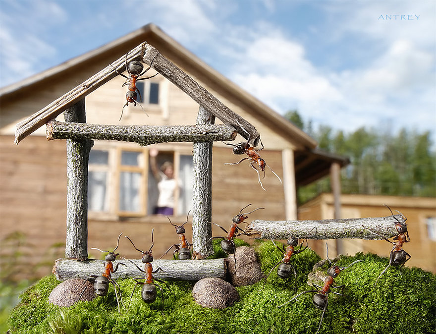 09-Neighbours-Andrey-Pavlov-Photographs-of-Ants-an-Affordable-Journey-to-a-Parallel-World