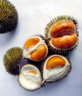 KUMPULAN GAMBAR ANEKA DUREN UNIK Foto Durian Wallpaper Terbaru