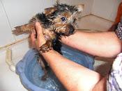 Su primer baño...