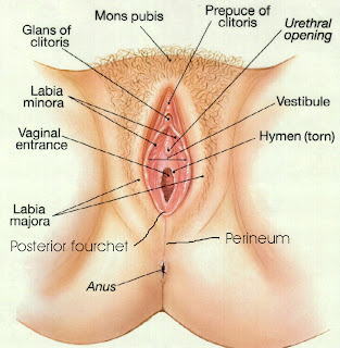 clear picture of vagina