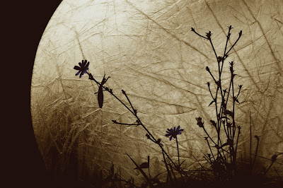 """Luna"" by Coffea at DeviantArt."