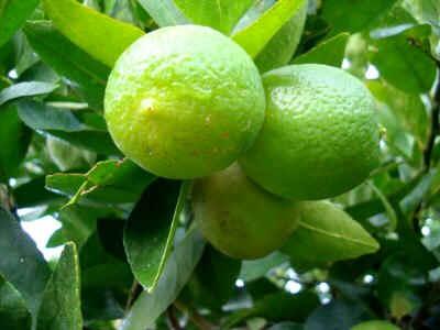 Jarabe de limón - Receta Natural