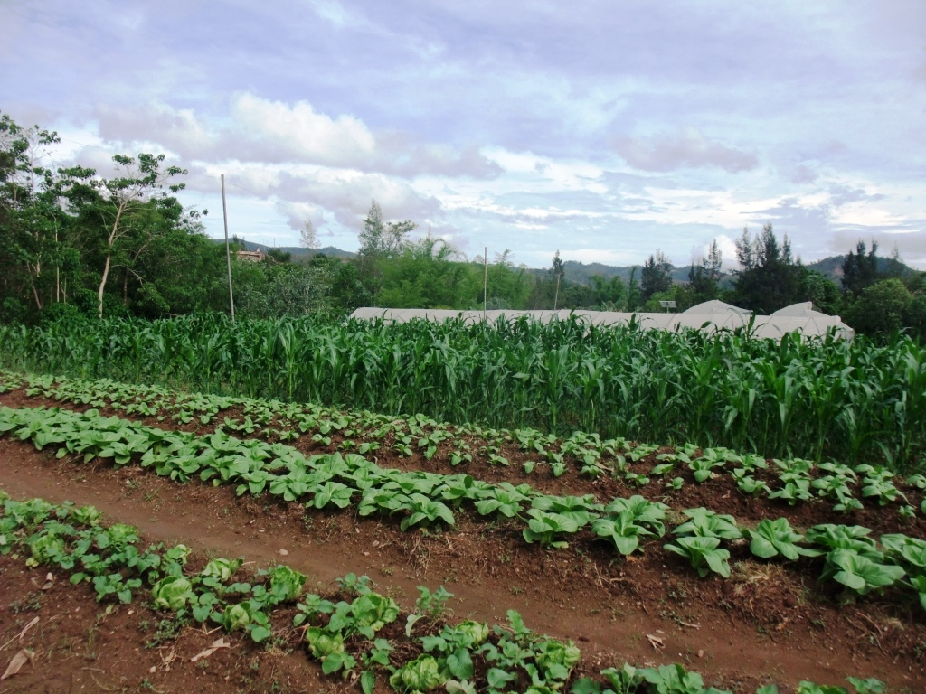 how commercial farming is unique from subsistence farming