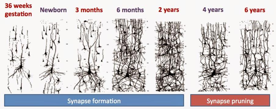 Drug to increase brain capacity image 2