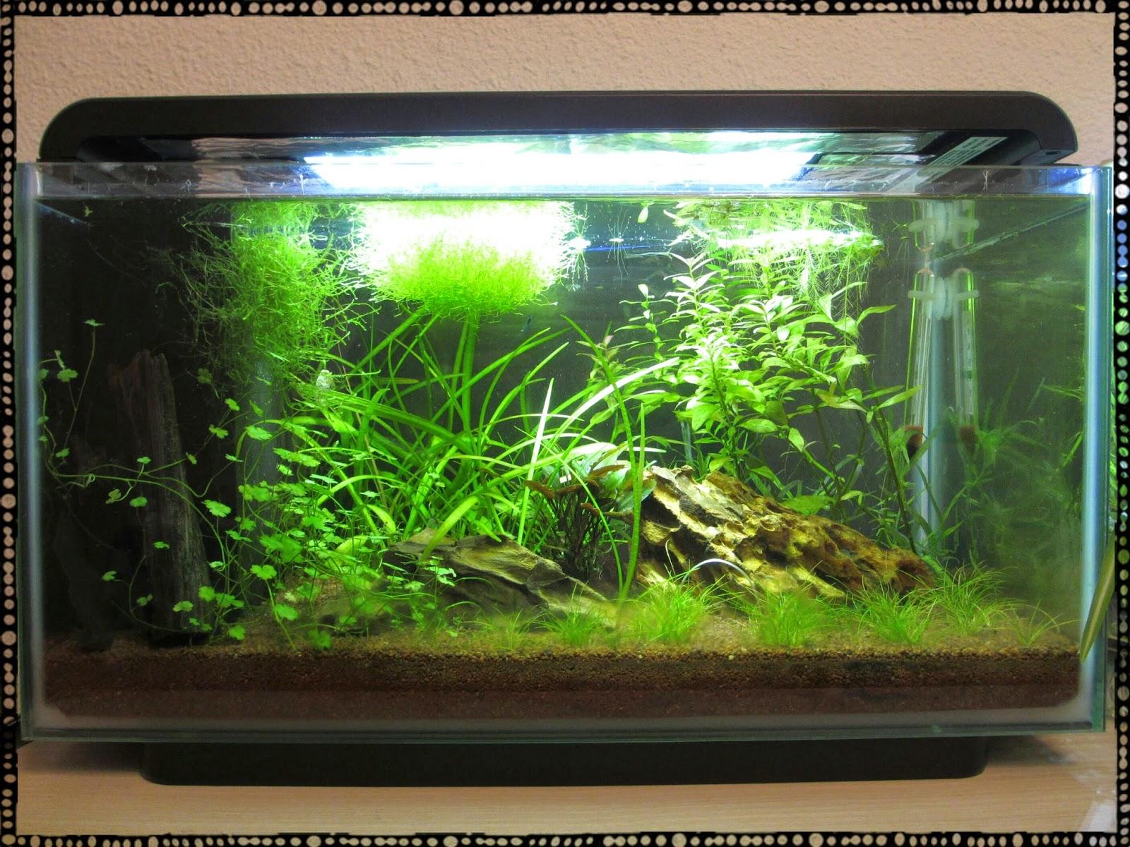 incubation artificielle d oeufs de crevettes d aquarium 1 232 re tentative cinq minutes par ici
