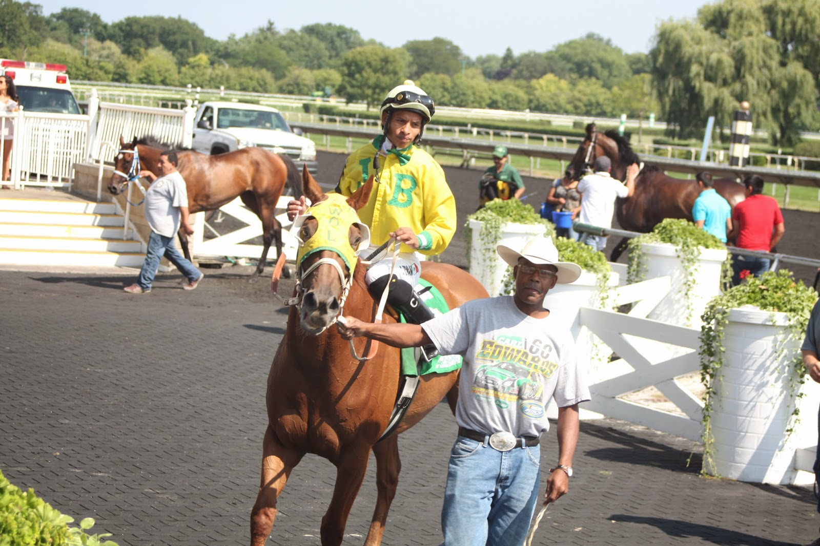 Horse at Arlington Park