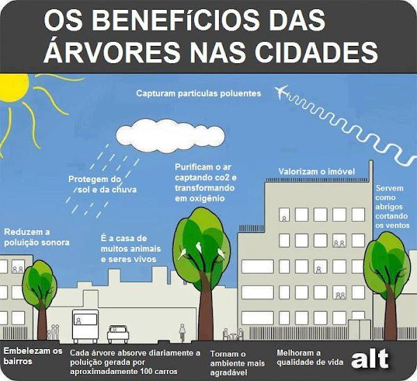 benefícios das árvores na cidade