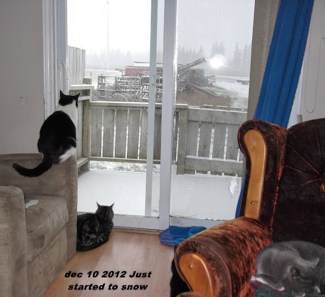 cats watching snowfall