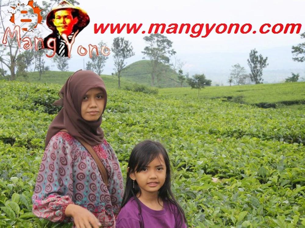 Wisata Perkebunan Teh Subang, Jawa Barat