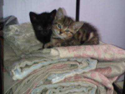 fat kittens