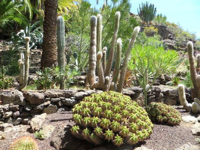 cactus garden palmitos park gran canaria