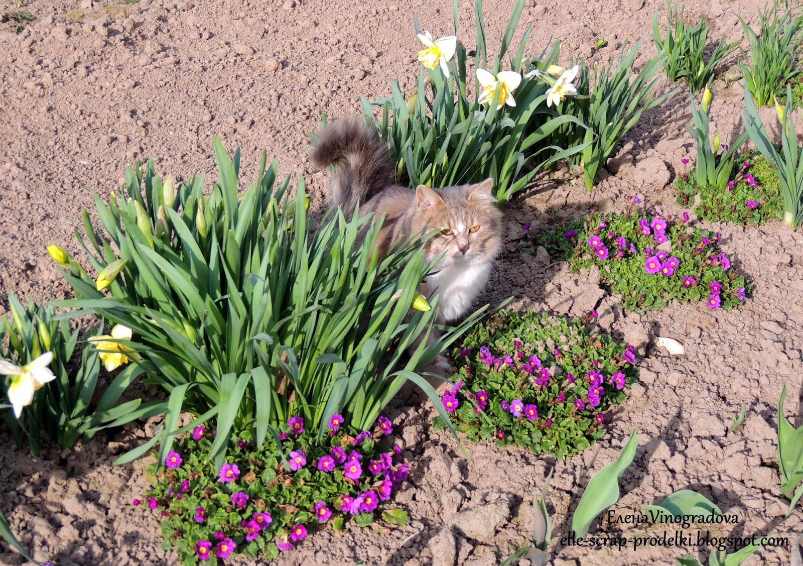 ЕленаVinogradova. Цветы нашего сада #12
