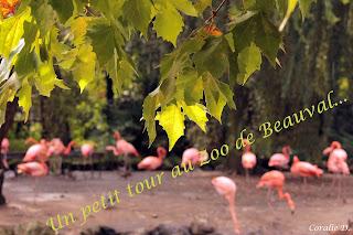 http://pocketfulofsweetness.blogspot.com/2015/10/photo-2-zoo-de-beauval-part1.html
