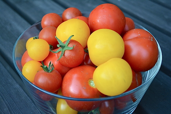 Tunnetko tomaattilajikkeet?