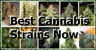 http://cannabistrains.blogspot.com/2016/01/10-best-cannabis-strains-now.html?spref=bl