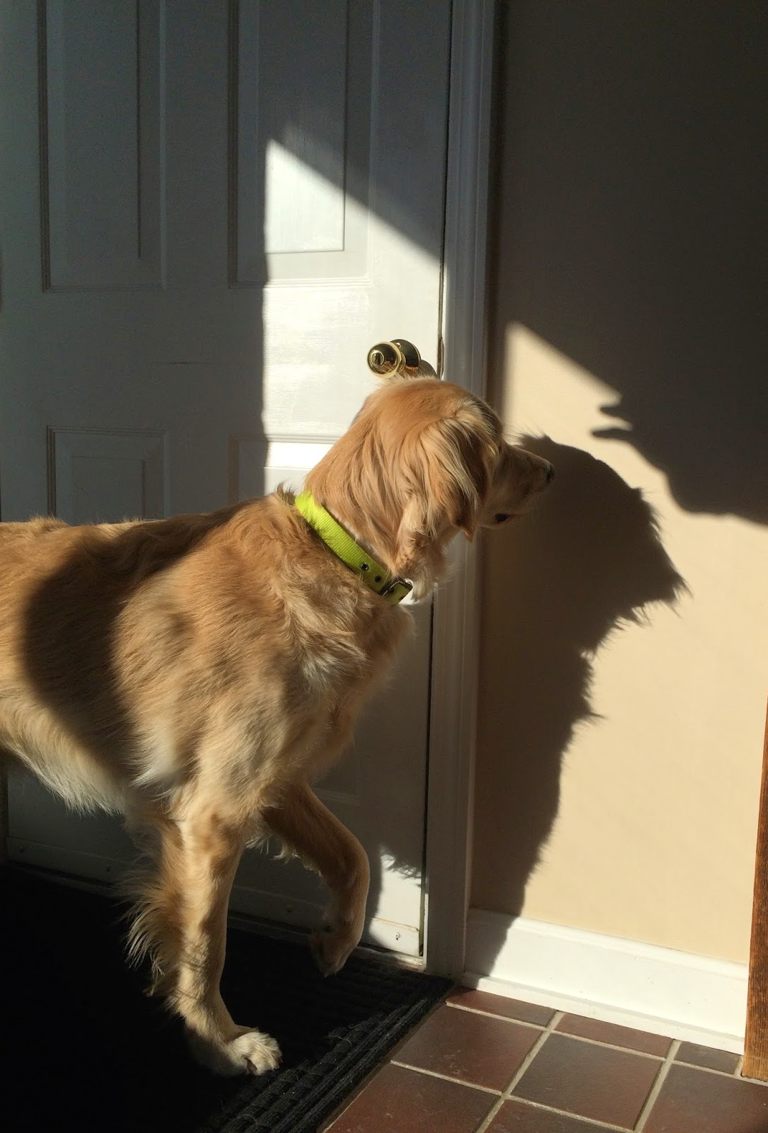 dog meeting his shadow