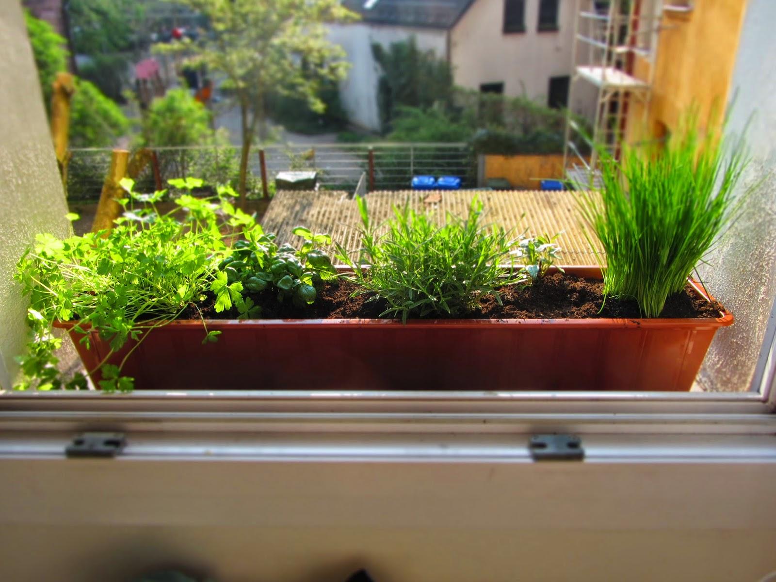 ina is s t urban farming 1 mein kleiner kr utergarten. Black Bedroom Furniture Sets. Home Design Ideas