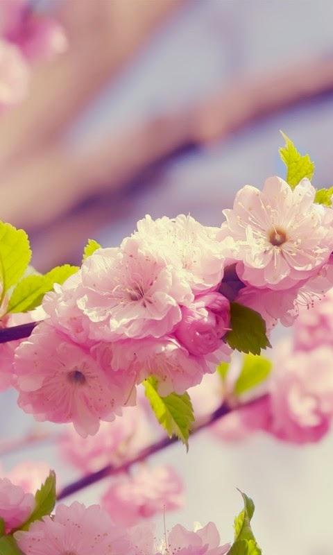 Hinh nen hoa dap cho iphone