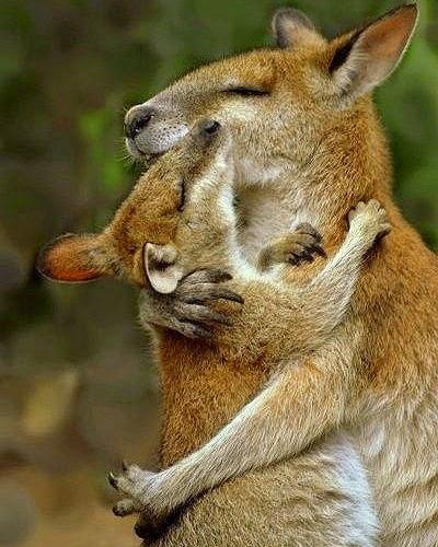 kangaroos world kickboxings champion deadly adorable
