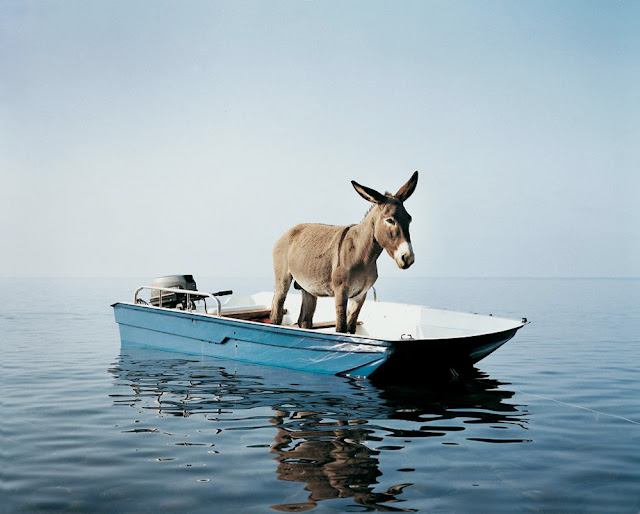 burro no barco