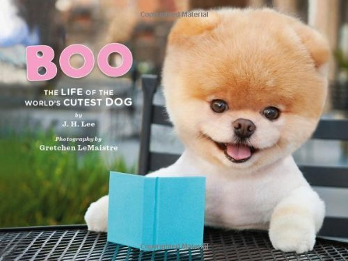 Boo The Cutest Dog In The World Soft Toy