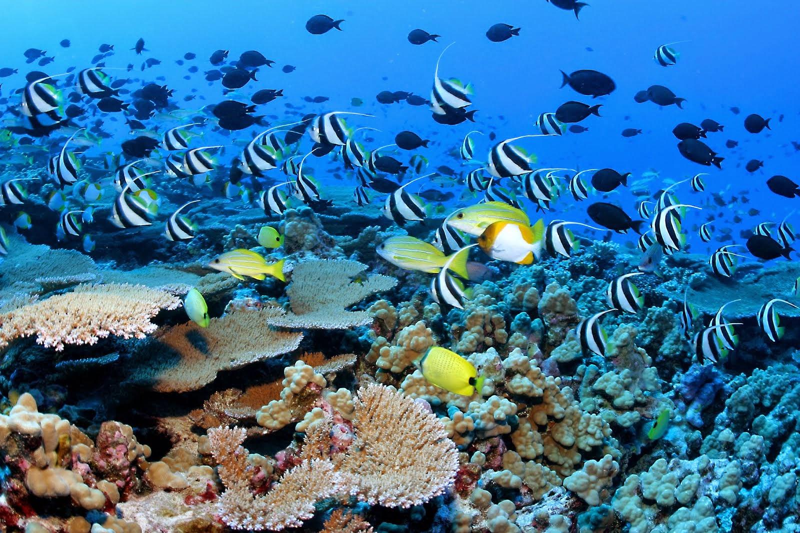 Seberapa Pentingkah Kita Menjaga Laut Dalam ?