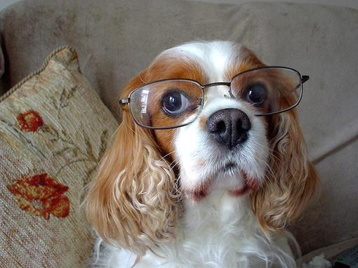 Funny Amp Cute Animals With Glasses Pets Cute And Docile